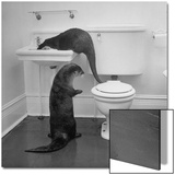 Otters Playing in Bathroom