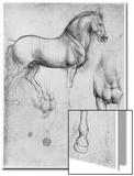 Studies of Horses, C1490 Acrylique par Leonardo Da Vinci