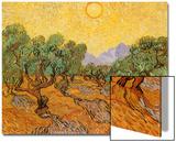 Sun over Olive Grove, 1889 Acrylique par Vincent Van Gogh