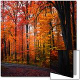 Arc en ciel d'automne Acrylique par Philippe Sainte-Laudy