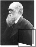 Charles Darwin  C1870 (B/W Photo)