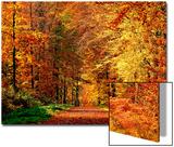 Chemin d'automne Acrylique par Philippe Sainte-Laudy