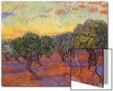 Grove of Olive Trees, 1889 Acrylique par Vincent Van Gogh