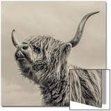 Highland Cattle Acrylique par Mark Gemmell