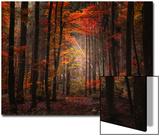 Bois naturel Acrylique par Philippe Sainte-Laudy