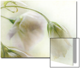 Study of Wilting White Flowers