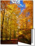Chemin dorée Acrylique par Philippe Sainte-Laudy