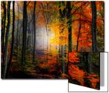 Lumières et couleurs Acrylique par Philippe Sainte-Laudy