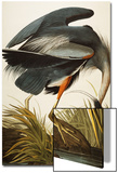 Great Blue Heron (Ardea Herodias)  Plate Ccxi  from 'The Birds of America'