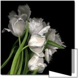 Frayed Tulips Acrylique par Magda Indigo