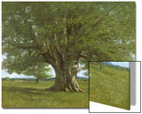 The Oak of Flagey  Called Vercingetorix