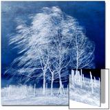 Vent bleu Acrylique par Philippe Sainte-Laudy