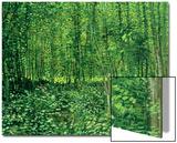 Bois et sous-bois, vers 1887 Acrylique par Vincent Van Gogh