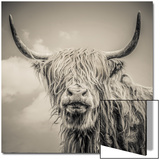 Highland Cattle Acrylique par Mark Gemmell