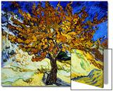 Mûrier à Saint-Rémy, 1889 Acrylique par Vincent Van Gogh