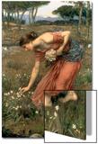 Narcissus  1912