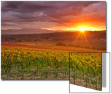 Italy  Umbria  Perugia District  Autumnal Vineyards Near Montefalco