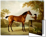 Tristram Shandy  a Bay Racehorse Held by a Groom in an Extensive Landscape  circa 1760