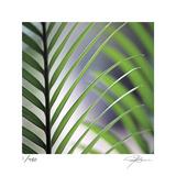 Tropical Fan