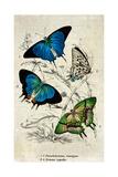 Kirby Butterflies I