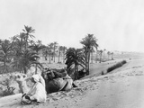 Dromedary in Tunisia  1926