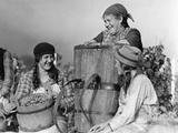 Grape Harvest in Switzerland  1930