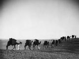 Caravan in the Desert  1933