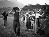 Grape Harvest in the Haut-Grésivaudan in Southern France  1943