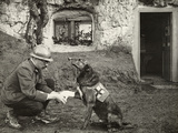 A WWI allied soldier bandages the paw of a Red Cross working dog