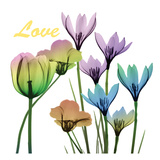 Floral Rainbow Love