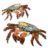 Winter Crabs