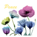 Floral Rainbow Peace