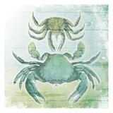 Sea Foam Crabs