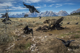 A grizzly bear fends off ravens to feed on a bison carcass