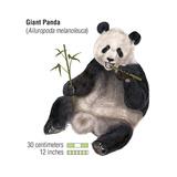 Giant Panda (Ailuropoda Melanoleuca)  Mammals