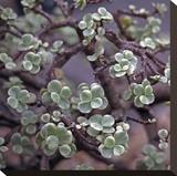 Succulent 13
