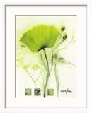 Coquelicot Vert I Reproduction encadrée par Marthe