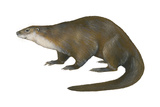 North American River Otter (Lutra Canadensis)  Weasel  Mammals