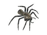 California Trapdoor Spider (Bothriocyrtum Californicum)  Arachnids