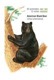 American Black Bear (Ursus Americanus)  Mammals
