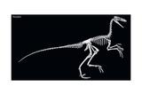 Troodon Skeleton  Dinosaurs
