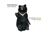 Asiatic Black Bear (Ursus Thibetanus)  Mammals