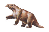 Megatherium  Extinct Ground Sloth  Mammals