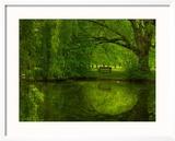 Green World Photo encadrée par Irene Suchocki