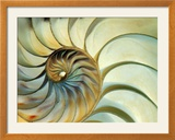 Close-up of Nautilus Shell Spirals Photo encadrée par Ellen Kamp