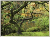 Portland Japanese Garden in Early Autumn: Portland Japanese Garden  Portland  Oregon  USA