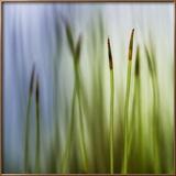 Velours forêt Photo encadrée par Ursula Abresch