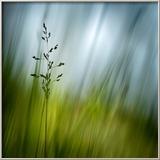 Morning Grass Photo encadrée par Ursula Abresch