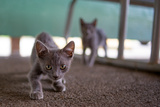 Wild Kittens Approach a Camera with Caution