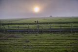 A Man Walks Through Agricultural Fields